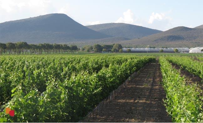 Bodegas de Cote: nueva propuesta de vino mexicano
