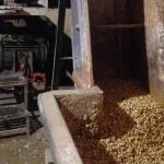 Visita al molino para comprar tortillas